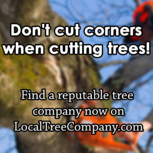 Local Tree Companies Near Me