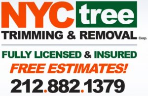 NYC-Tree-Company