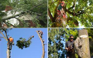 Tree Service Marketing Company